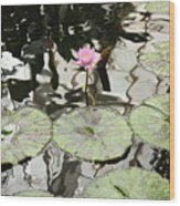 Water Lily Canvas Wood Print