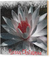 Water Lily Christmas Wood Print