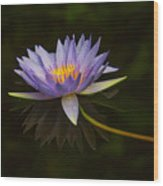 Water Lily Close Up Wood Print