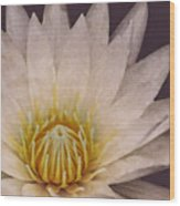 Water Lily Digital Painting Wood Print