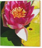 Water Lily Fc 2 Wood Print by Diana Douglass