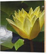 Water Lily Fc  Wood Print by Diana Douglass
