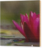 Water Lily - Id 16235-220248-4550 Wood Print