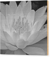 Water Lily In Black And White Wood Print