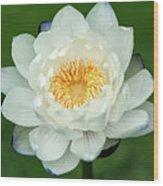 Water Lily In Bloom Wood Print