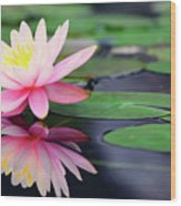 Water Lily In Lake Wood Print by Anakin Tseng