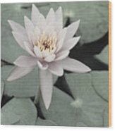 Water Lily In Soft Pink Wood Print