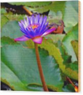 Water Lily In Tahiti Wood Print