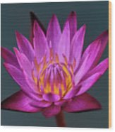 Water Lily Iv Wood Print