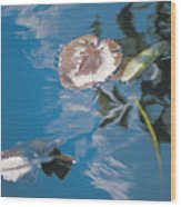Water Lily Leaves And Reflection Of Clouds In Unknown Lake Wood Print
