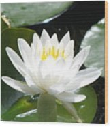 Water Lily Lovely Wood Print