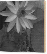 Water Lily Monochrome Wood Print