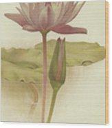 Water Lily  Nymphaea Zanzibarensis Wood Print