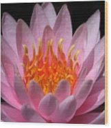Water Lily On Fire Wood Print