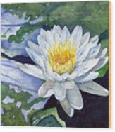 Water Lily Wood Print by Sam Sidders