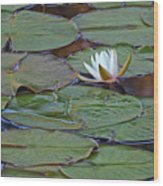 Water Lily Scene Wood Print