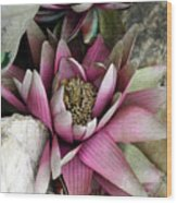 Water Lily - Seerose Wood Print