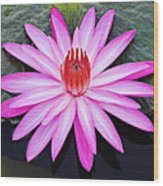 Water Lily-st Lucia Wood Print