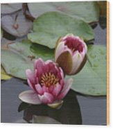 Water Lily With Bee Wood Print