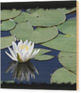 Water Lily With Black Border Wood Print
