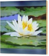 Water Lily With Blue Border - Digital Painting Wood Print