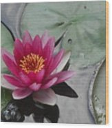 Water Lily With Bubbles Wood Print