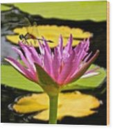 Water Lily With Dragonfly Wood Print