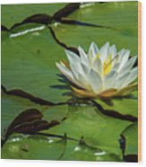 Water Lily With Friend Wood Print