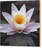 Water Lily With Reflection  Wood Print
