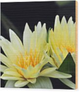Water Lily Yellow Nymphaea Wood Print