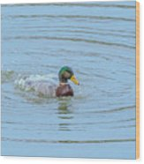 Water Off A Ducks Back Wood Print
