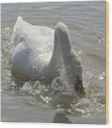 Water Off A Swan's Back Wood Print