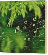 Water Orbs In Cobweb. Wood Print