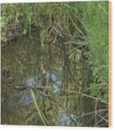 Water Pond Reflection In Peters Canyon Wood Print