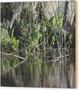 Water Reeds And Spanish Moss Wood Print