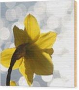 Water Reflected Daffodil Wood Print