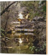Water Stairs Wood Print
