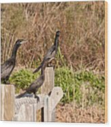 Water Turkeys In The Marsh Wood Print