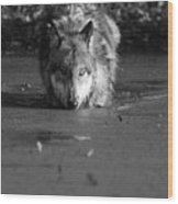 Water Wolf I Wood Print
