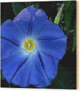 Watercolor Morning Glory Wood Print