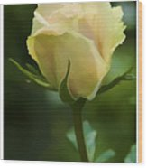 Watercolor Rose Wood Print