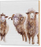 Watercolor Sheep Wood Print