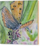 Watercolor - Small Butterfly On A Flower Wood Print