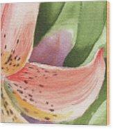 Watercolor Tiger Lily Dance Of Petals Close Up  Wood Print