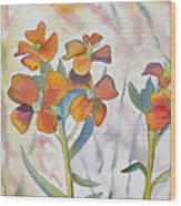 Watercolor - Wallflower Wildflowers Wood Print