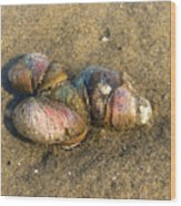 Watercolored Seashells Wood Print