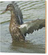 Watercovered Wingflapper Wood Print