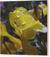 Waterdrops On A Pansy Wood Print
