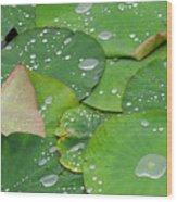Waterdrops On Lotus Leaves Wood Print