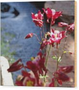 Waterfall And Columbine II - Pride Of Colorado Wood Print
